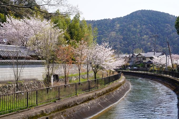 京都_桜_2020_41 No43