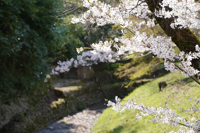 京都_桜_2020_41 No44