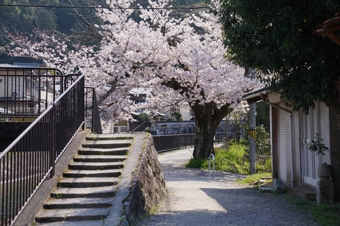 京都_桜_2020_41 No46