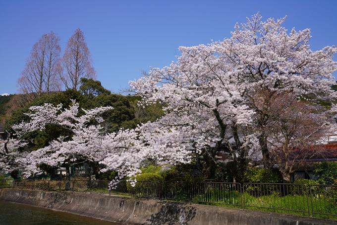 京都_桜_2020_41 No47