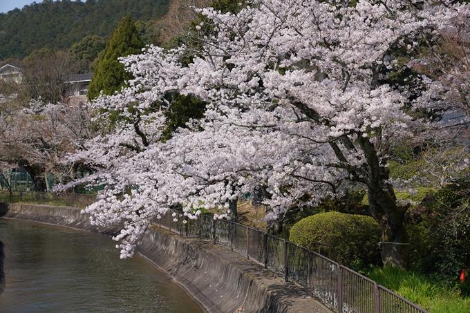 京都_桜_2020_41 No48