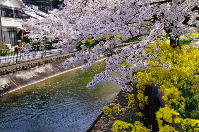 京都_桜_2020_41 No51