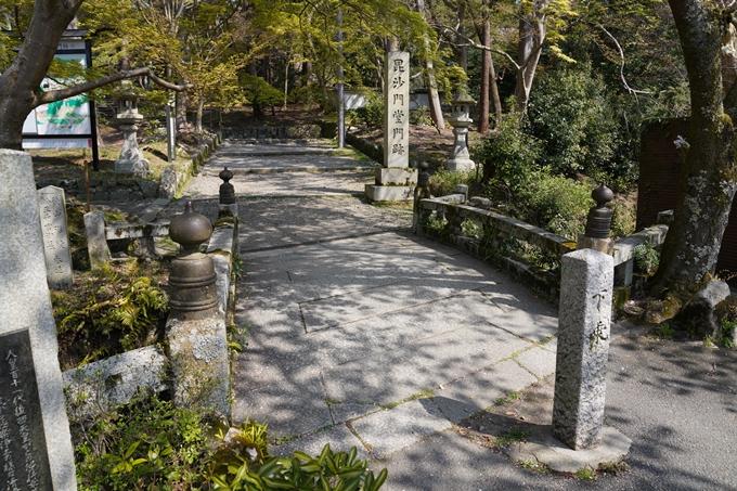 京都_桜_2020_41 No55