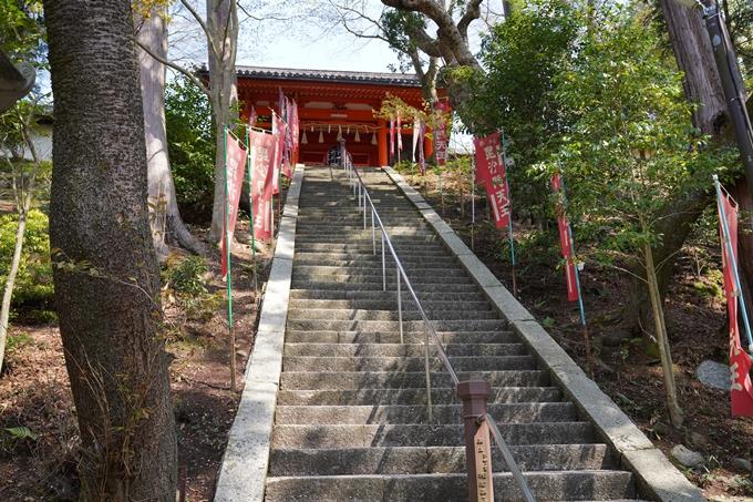 京都_桜_2020_41 No57
