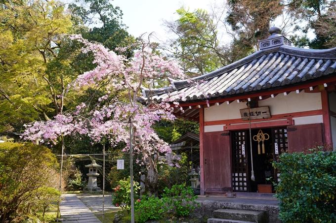 京都_桜_2020_41 No58