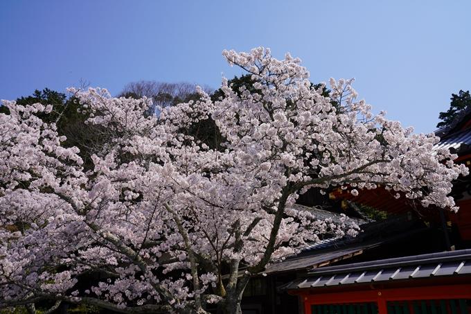 京都_桜_2020_41 No61