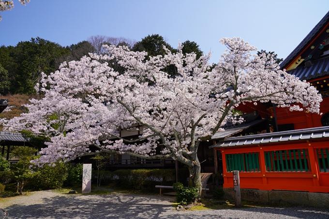 京都_桜_2020_41 No62