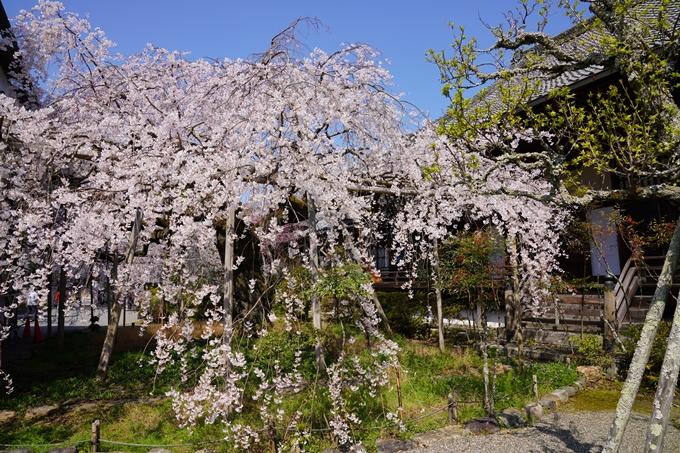 京都_桜_2020_41 No64