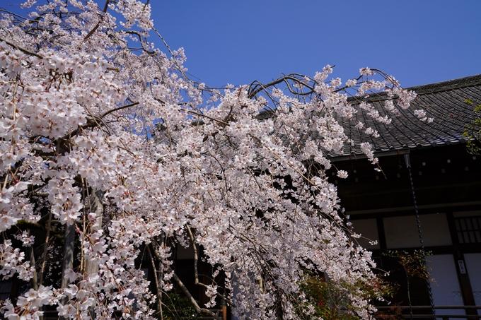 京都_桜_2020_41 No66