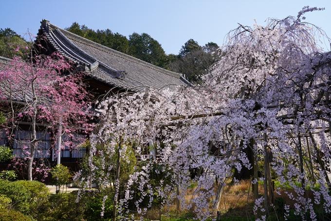 京都_桜_2020_41 No67