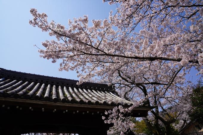 京都_桜_2020_41 No69