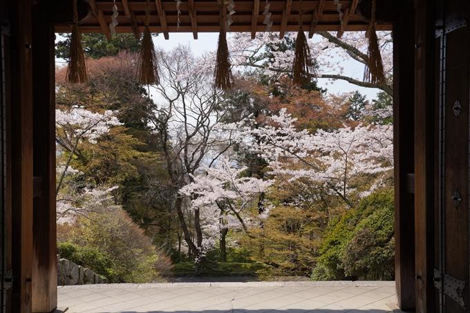 京都_桜_2020_41 No70