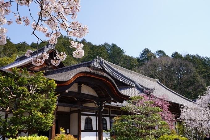 京都_桜_2020_41 No71