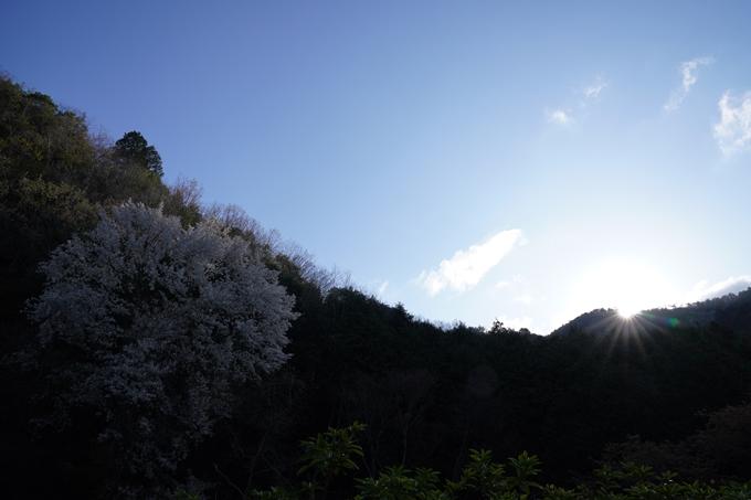 京都_桜_2020_43 七谷川 No3
