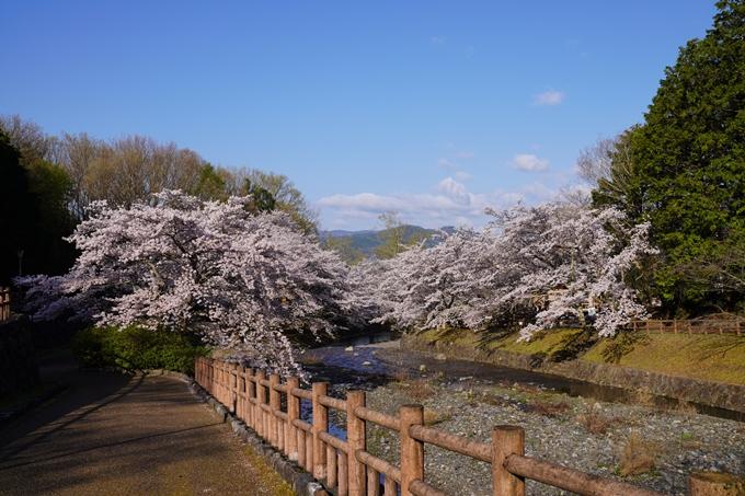 京都_桜_2020_43 七谷川 No5
