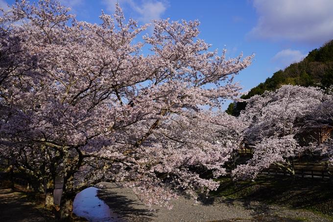 京都_桜_2020_43 七谷川 No9
