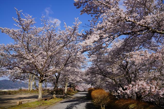 京都_桜_2020_43 七谷川 No15