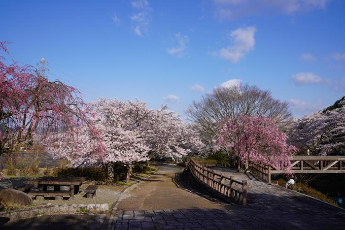 京都_桜_2020_43 七谷川 No16