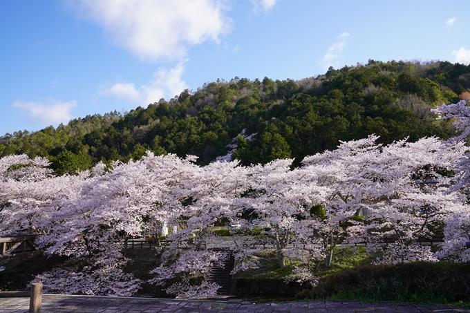 京都_桜_2020_43 七谷川 No17