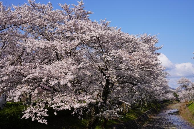 京都_桜_2020_43 七谷川 No47