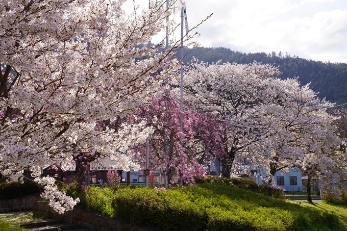 京都_桜_2020_43 七谷川 No51