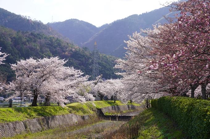 京都_桜_2020_43 七谷川 No58