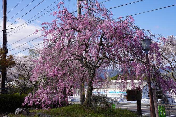 京都_桜_2020_43 七谷川 No70