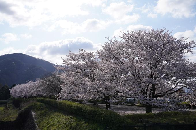京都_桜_2020_43 七谷川 No71
