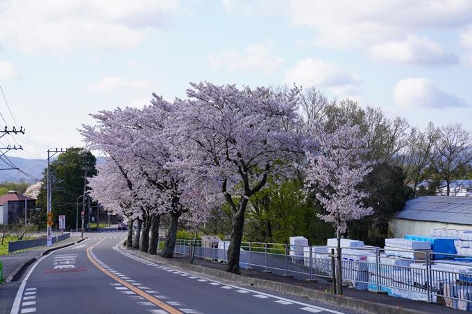 京都_桜_2020_43 七谷川 No73
