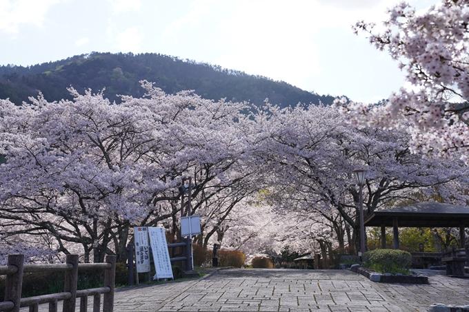 京都_桜_2020_43 七谷川 No79