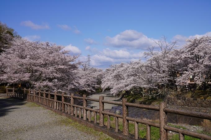 京都_桜_2020_43 七谷川 No84