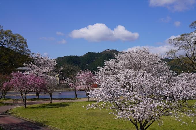 京都_桜_2020_44 大堰川緑地公園 No10