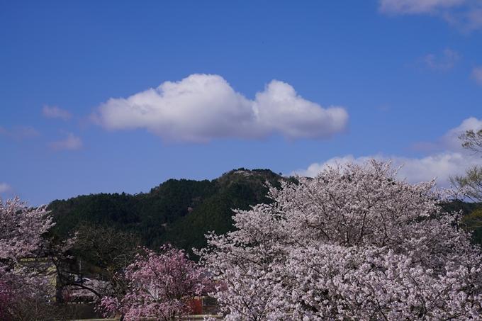京都_桜_2020_44 大堰川緑地公園 No11
