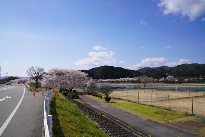 京都_桜_2020_44 大堰川緑地公園 No21