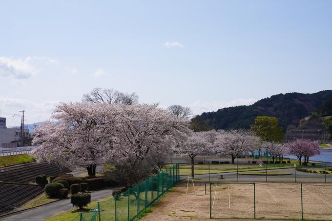 京都_桜_2020_44 大堰川緑地公園 No22