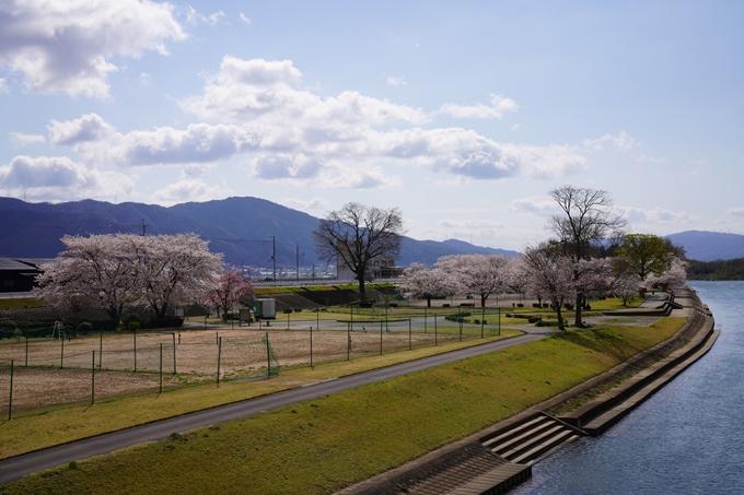 京都_桜_2020_44 大堰川緑地公園 No23