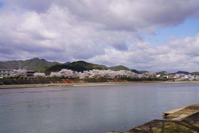 京都_桜_2020_44 大堰川緑地公園 No41