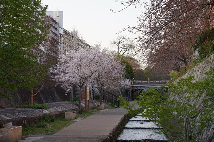 京都_桜_2020_45 堀川 No16