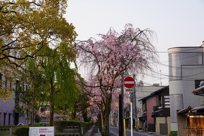 京都_桜_2020_46 裁判所 No3