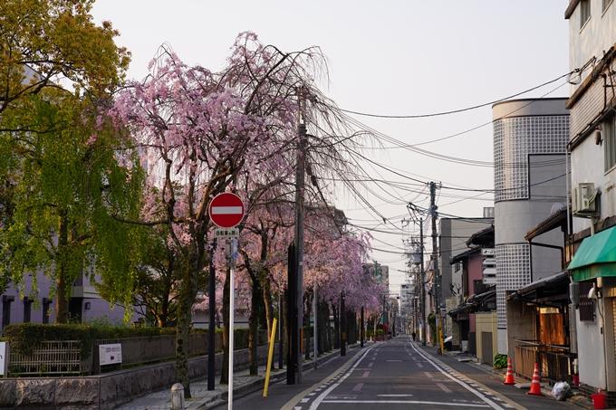 京都_桜_2020_46 裁判所 No4