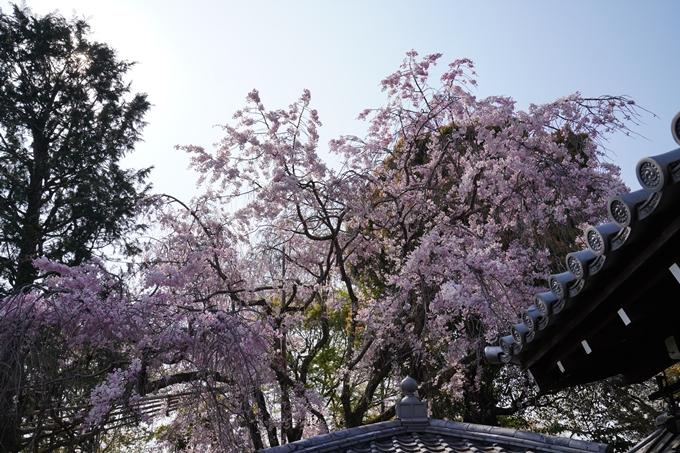 京都_桜_2020_47 永運院 No10