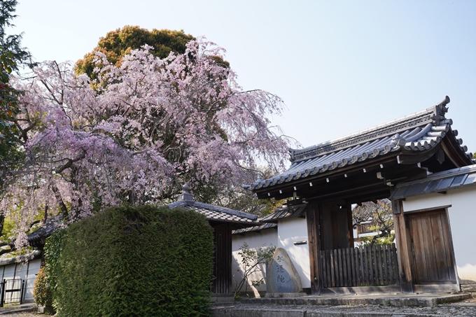 京都_桜_2020_47 永運院 No14