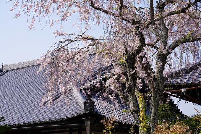 京都_桜_2020_47 永運院 No16