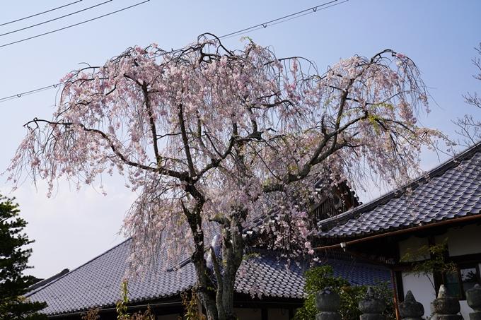 京都_桜_2020_47 永運院 No17