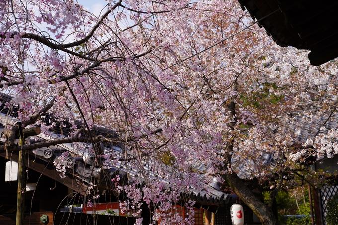 京都_桜_2020_47 永運院 No32