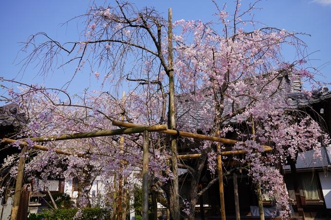 京都_桜_2020_47 永運院 No34