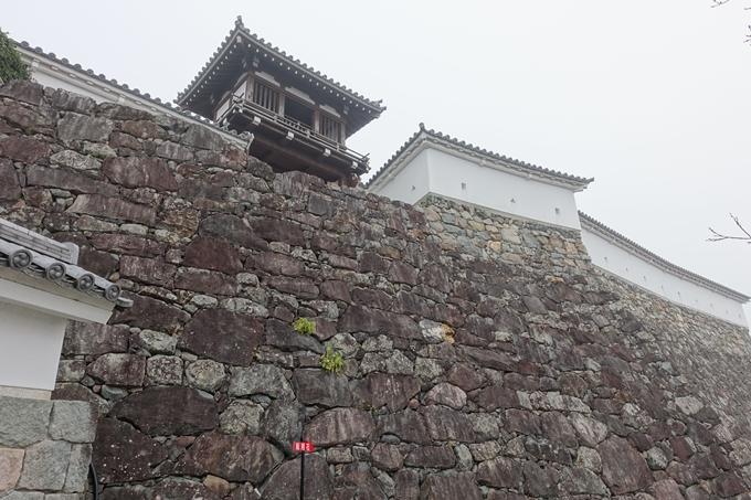 麒麟がくる_福知山城 No20