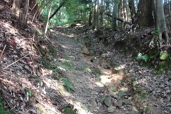 行者山 No18
