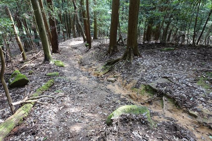 行者山 No67