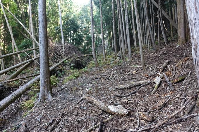 三郎ヶ岳 No23